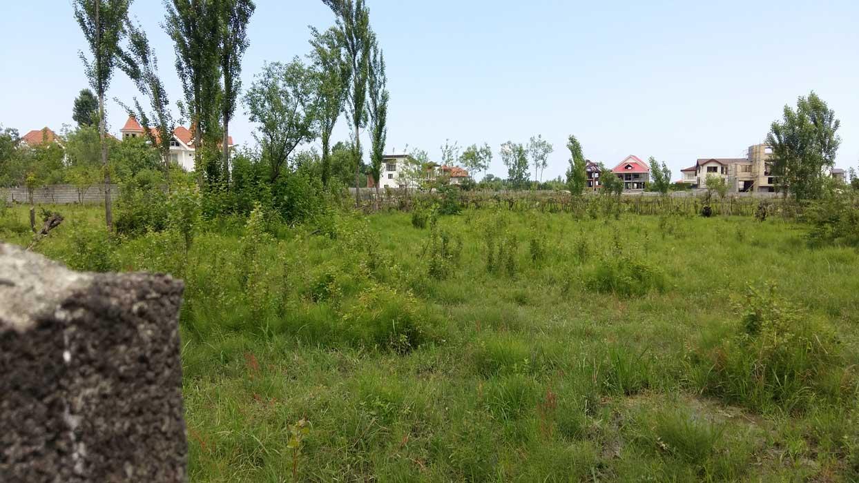 فروش زمین نوشهر پای جنگل