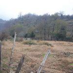 فروش زمین ارزان در خیرود نوشهر