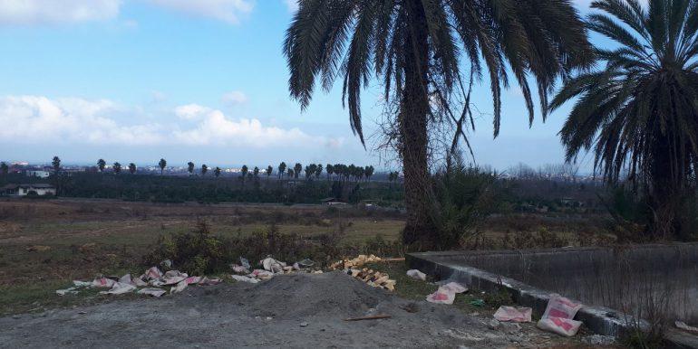 فروش زمین هکتاری با سند تک برگ در نوشهر (6)