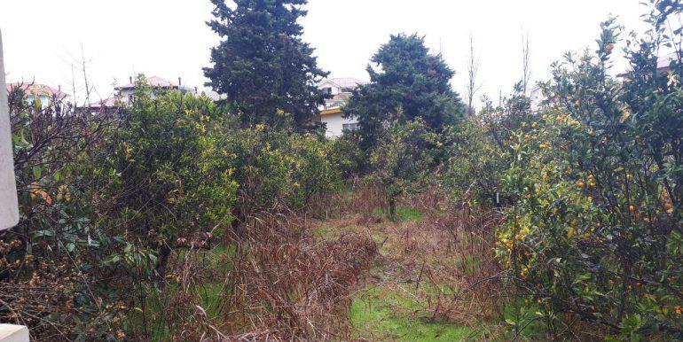 خرید ویلا باغ با سند در شمال (1)